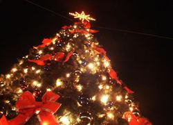 Normal_kerstboom
